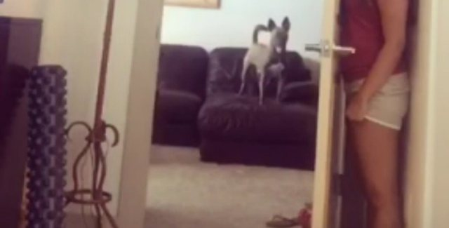 Dog stands on couch while owner hides behind door