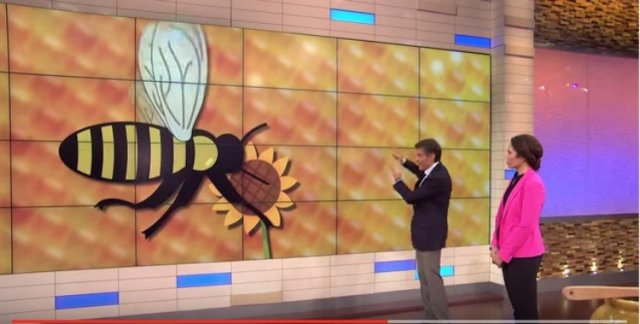 Doctor Oz shows illustrated slide of bee with flower