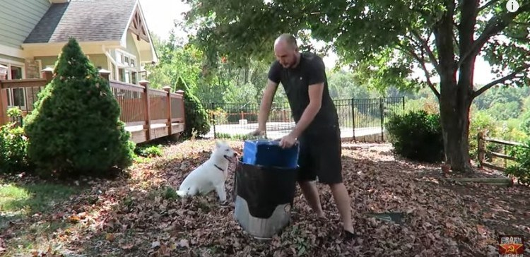 How to get rid of fallen leaves