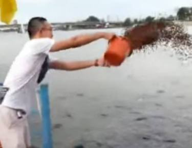 Man feeds fish off boat and they go into a frenzy