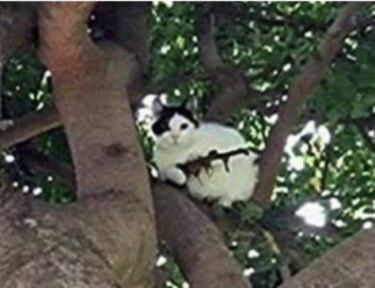 cat with branch that looks like gun