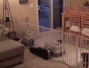 Image of dog plotting escape.