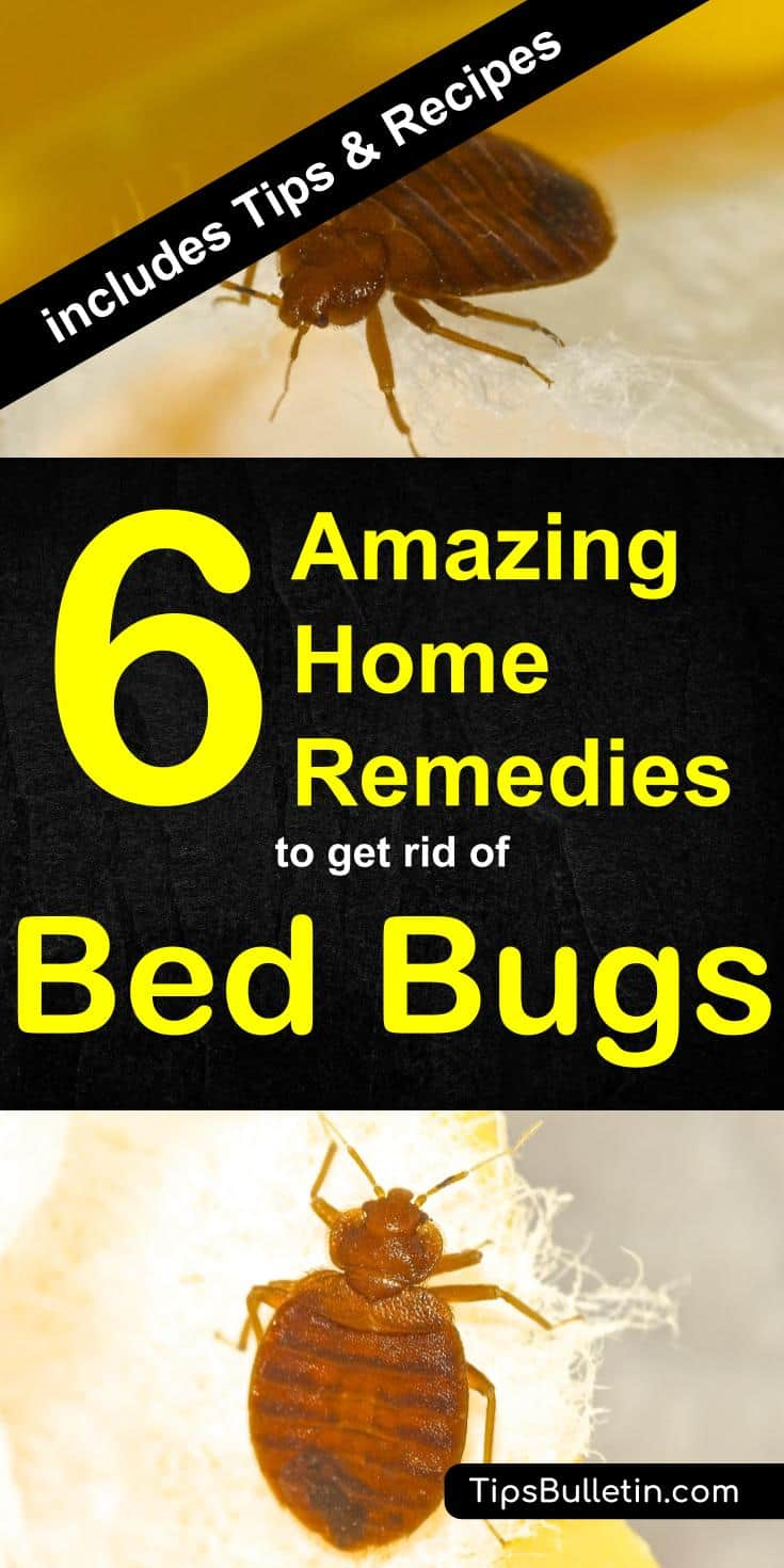 Sprays For Bed Bugs 6 Home Remedies To Get Rid Of Bed Bugs Incl Recipes