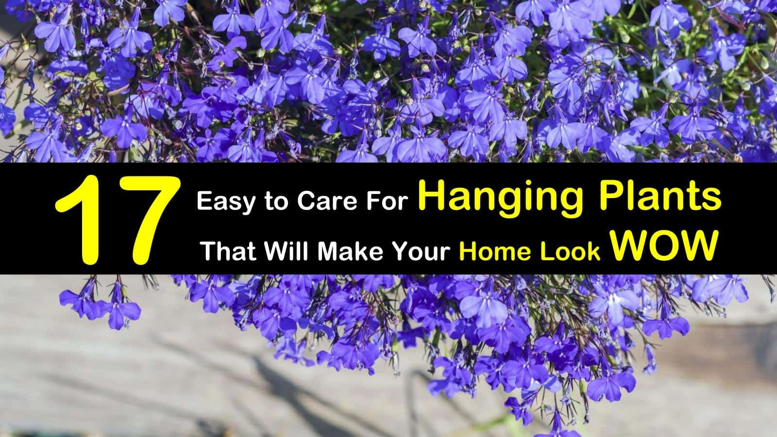 Easy To Care For Houseplants 17 Easy To Care For Hanging Plants That Will Make Your