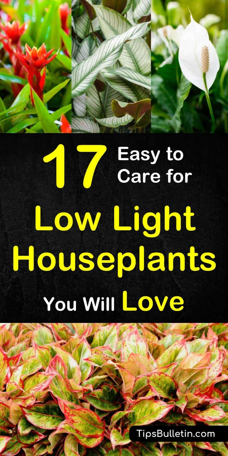 Indoor Plants For Low Light 17 Easy To Care For Low Light Houseplants You Will Love