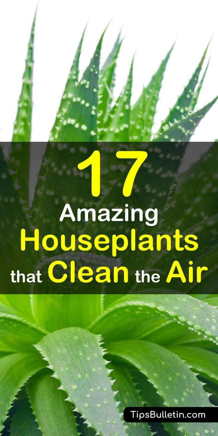 Indoor Plants For Low Light 17 Amazing Houseplants That Clean The Air