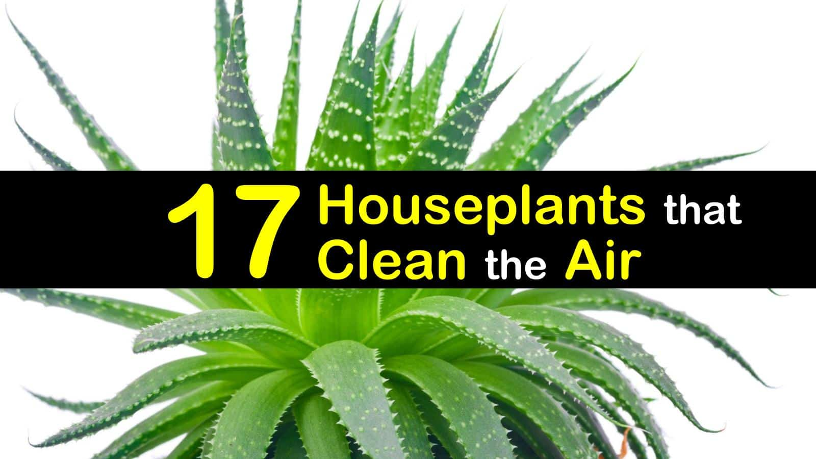 Chrysalidocarpus Space For Life 17 Amazing Houseplants That Clean The Air