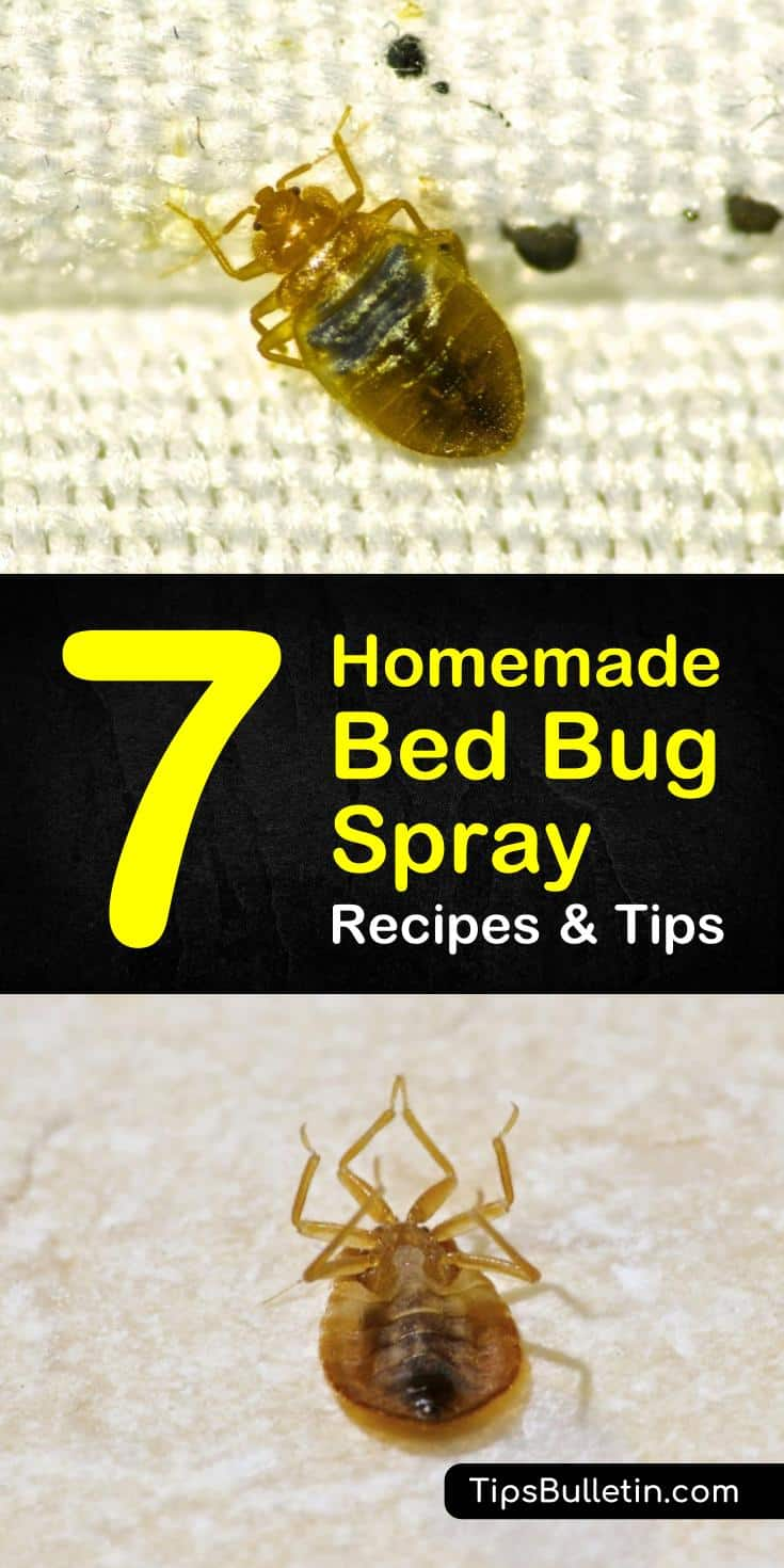 Sprays For Bed Bugs Getting Rid Of Bed Bugs 7 Homemade Bed Bug Spray Recipes And Tips