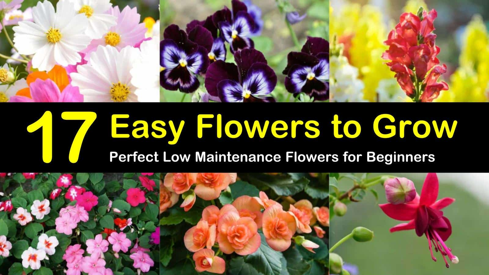 17 Easy Flowers To Grow Perfect Low Maintenance Flowers For Beginners