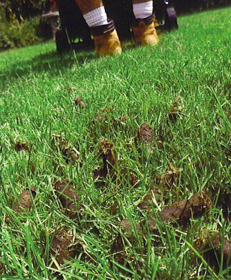 Do I Need To Aerate My Lawn? |