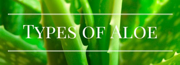 Aloe Vera Plant Care Tips: Growing, Planting, Pruning. Diseases