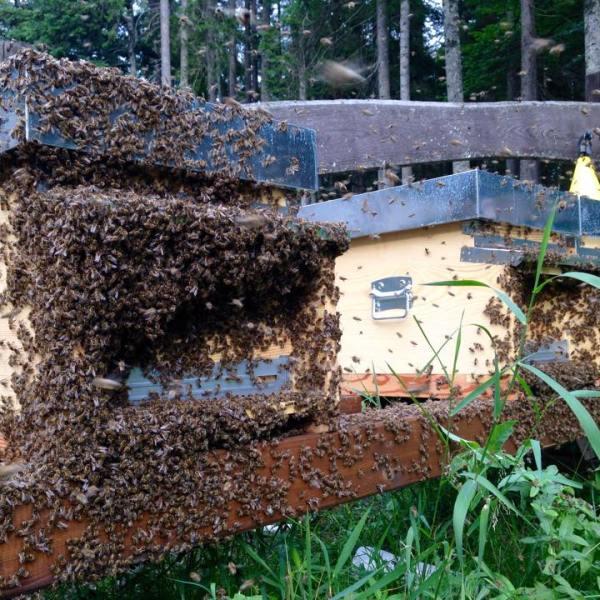 Bio Bienenstock