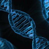 DNA_0