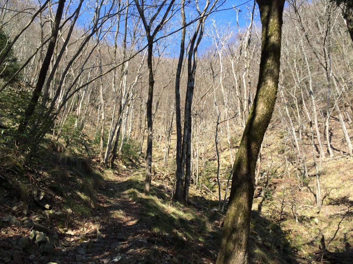 千丈寺山(北摂、590m)