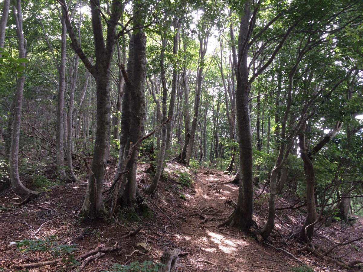 野坂岳 (913m)