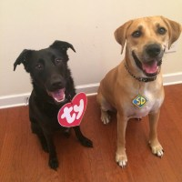 Diy Scooby Doo Costume For Dogs