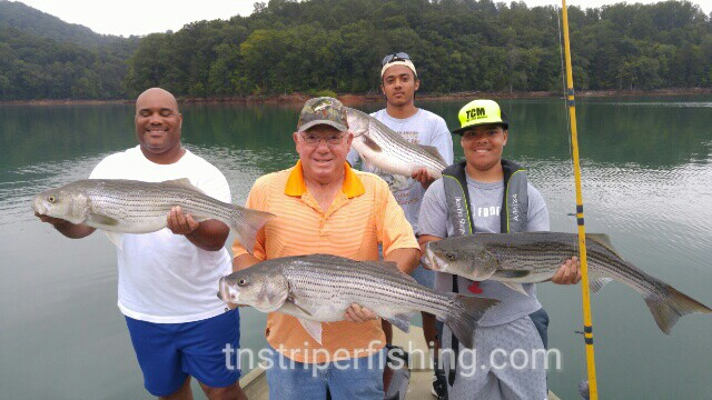 Norris lake ralph jamie anthony and tony 7 24 2016 for Norris lake fishing