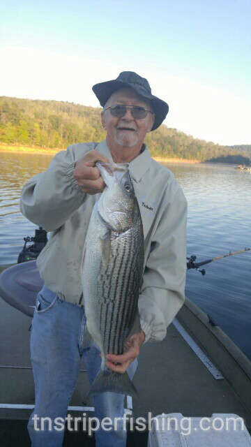 Norris lake 10 6 2016 jay 39 s striper guide service for Norris lake fishing
