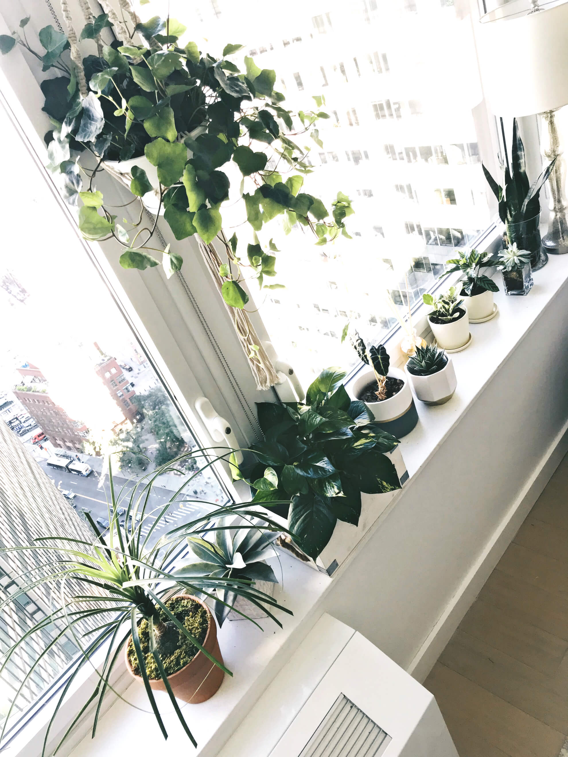 Indoor Plants The Importance Of Indoor Plants In An Apartment To Be Bright