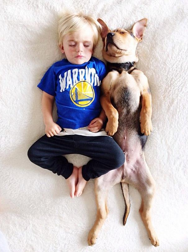 toddler-naps-with-puppy-theo-and-beau-2-11