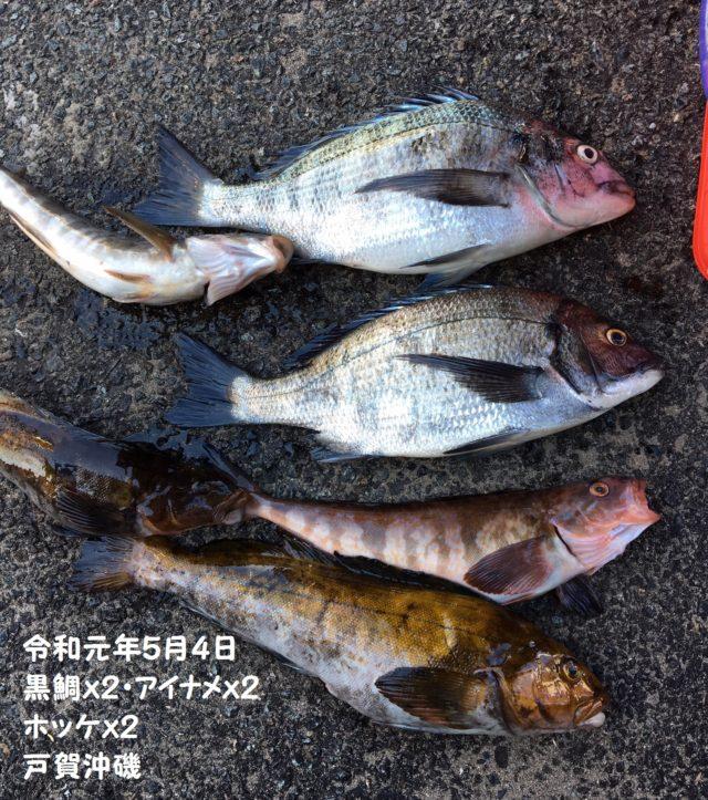 20190504 クロダイ2 アイナメ2 ホッケ2 S友