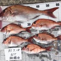 真鯛の数釣り!(^^)!