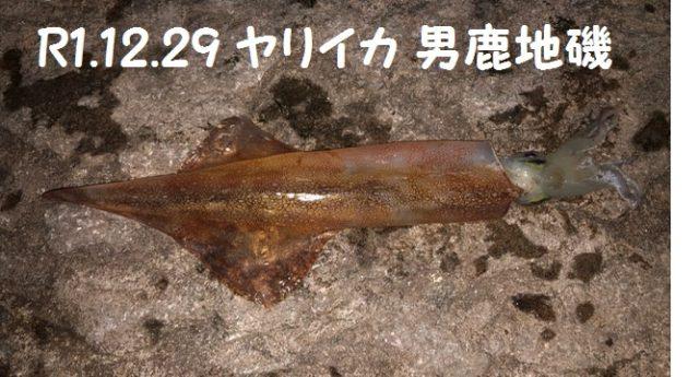 20191229 帆掛 ヤリイカ 大輔