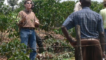 Coffee Quality Institute to honor Borlaug Institute scientist