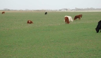 Texas crop, weather for May 3, 2011