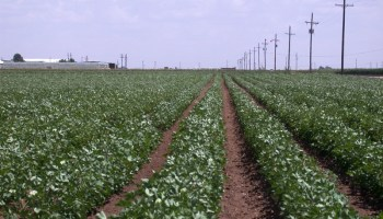 Texas crop, weather for Sept. 7, 2011
