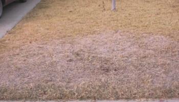 East Texas turfgrass conference set Feb. 2