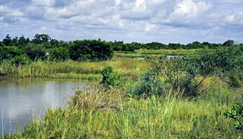 Meeting to address water quality in Copano Bay watershed