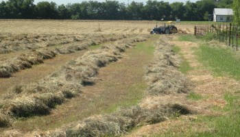 Texas crop, weather for May 1, 2012