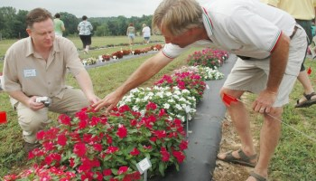 East Texas horticultural field day set June 28