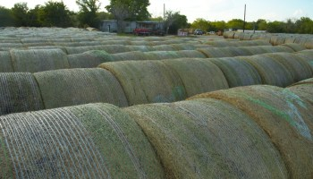 Texas crop, weather for July 31, 2012