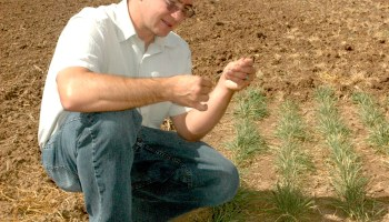 AgriLife Research to participate in $3.3 million wheat disease study