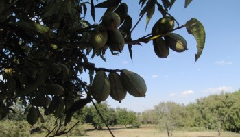 Texas crop, weather for Oct. 10, 2012
