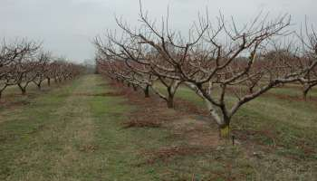 New orchards are like marriage: be ready to commit long-term