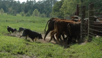 East Texas livestock and pasture management school now accepting students
