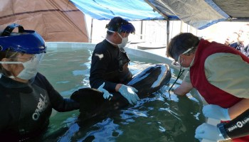 Beached marine-mammal training offered at South Padre Island