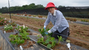 East Texas Horticultural Field Day set June 27