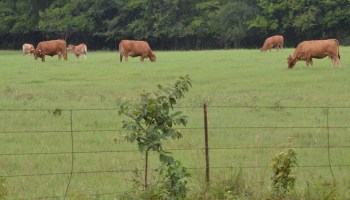 Texas crop, weather for Aug. 27, 2013