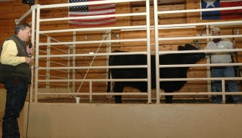 42nd South Central Texas Cow-Calf Clinic, Trade Show scheduled Oct. 25