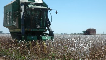 Extension expert advises cotton producers to follow fundamentals