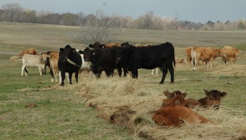 Rebuilding beef herd training to be held Nov. 20 in Paris