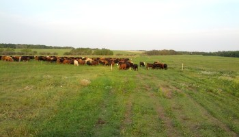 AgriLife Research ecologist: Production comes after restoration of rangeland