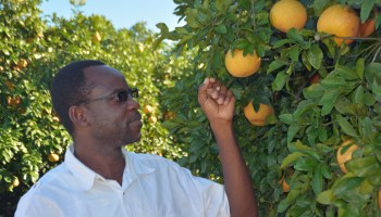 Residents can help save Texas' citrus industry