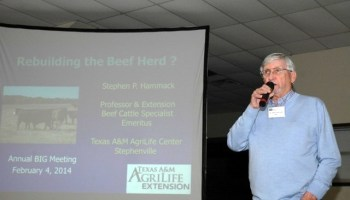 Expert: Cattle producers have many options to weigh when considering restocking