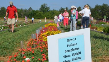 East Texas Horticultural Field Day set June 26