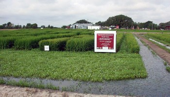 40th annual Eagle Lake Rice Field Day to be June 24